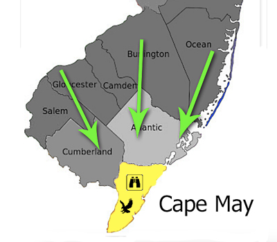 cape-may-funnell